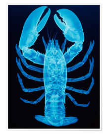 Poster  X-ray of lobster - D. Roberts