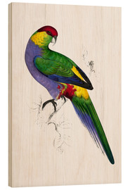 Wood print  Red capped Parakeet 1 - Edward Lear