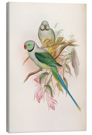 Canvas print  Blue winged Parrakeet - John Gould