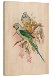 Wood print  Blue winged Parrakeet - John Gould