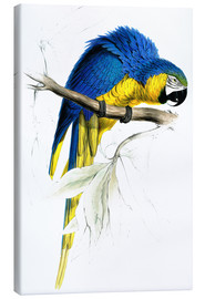 Canvas print  Blue & Yellow Macaw - Edward Lear
