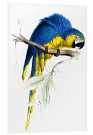 Foam board print  Blue & Yellow Macaw - Edward Lear