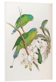 Forex  Philippine Racket tailed Parrot - John Gould