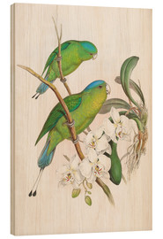 Wood print  Philippine Racket tailed Parrot - John Gould