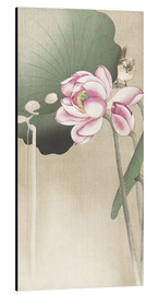 Aluminium print  Lotus Flower and Finch - Ohara Koson