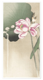 Poster  Lotus Flower and Finch - Ohara Koson