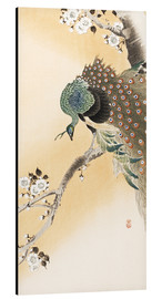 Aluminium print  A peacock in a cherry tree crown - Ohara Koson