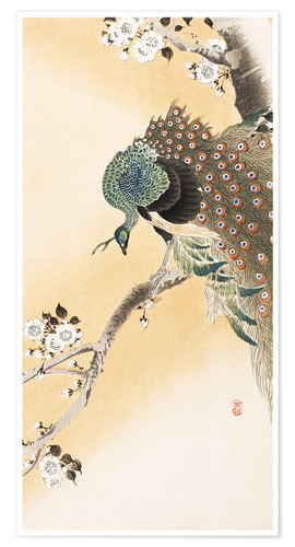 Premium poster A peacock in a cherry tree crown