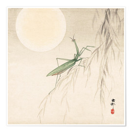 Premium poster praying mantis on willow branch, a full moon above