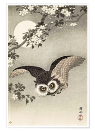Poster Owl in flight