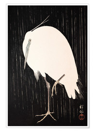 Premium poster White Crane in the rain
