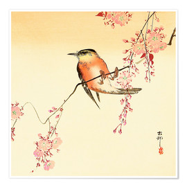Premium poster Red Bird and Cherry Blossoms