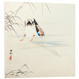Foam board print  Diving Mallard - Ohara Koson