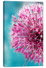 Canvas print  Allium in Pink - INA FineArt