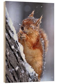 Wood print  Red squirrel in winter - Ervin Kobakçi