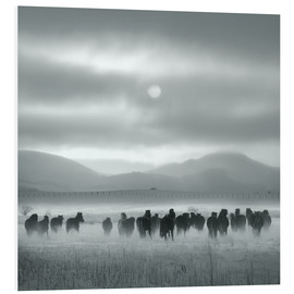 Foam board print  Toward the sun - Shu-Guang Yang