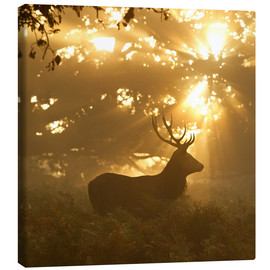 Canvas print  Ghost of the forest - Greg Morgan