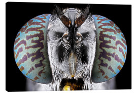 Canvas print  Soldier Fly - Donald Jusa