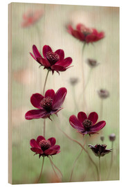 Wood print  Cosmos sway - Mandy Disher