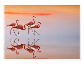 Premium poster  Flamingos in the mirror - Anna Cseresnjes