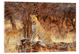 Acrylic print  Queen of the Bush - Tamara Beltrame