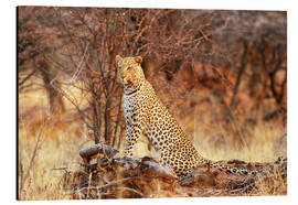 Aluminium print  Queen of the Bush - Tamara Beltrame