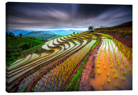 Canvas print  clouded rice field - Tetra