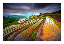 Premium poster clouded rice field