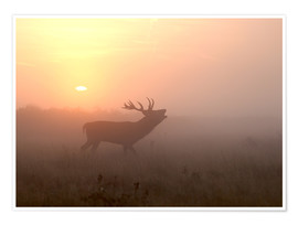 Premium poster Misty morning stag