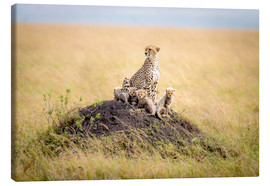 Canvas  Leopard mother - Ted Taylor