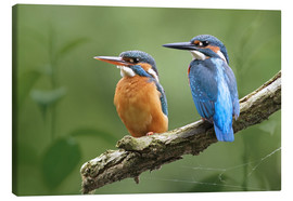 Canvas print  Kingfisher Germany - WildlifePhotography