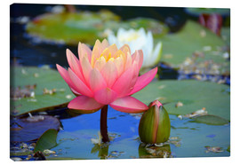 Canvas  water lily - GUGIGEI