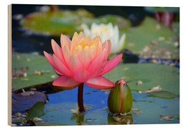 Wood print  water lily - GUGIGEI