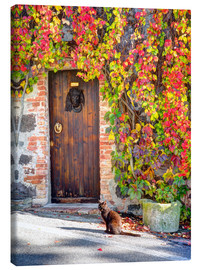 Canvas print  Cat in front of an ivy-lined door - Julie Eggers