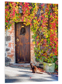 Forex  surrounded wooden door of autumn colored ivy - Julie Eggers