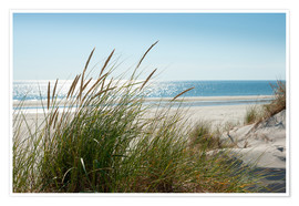 Premium poster Dune with fine marram grass