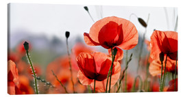 Canvas print  Poppies - Lichtspielart