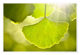 Premium poster Ginkgo leaves