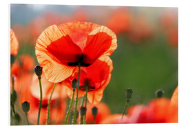 Foam board print  Poppies - Lichtspielart