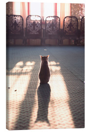 Canvas  Cat at the window - Matteo Colombo