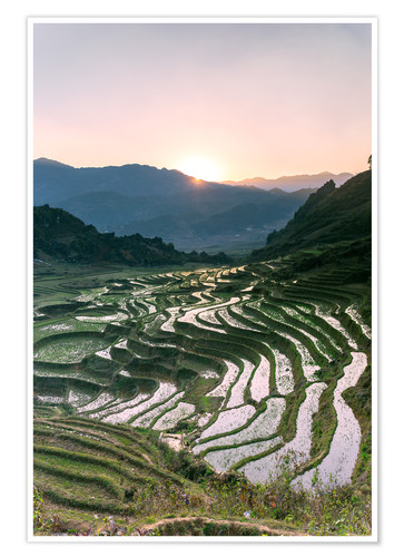 Premium poster Landscape: sunrise over rice paddies in Sa Pa, Vietnam