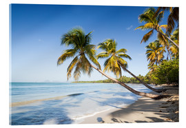 Acrylic glass  Famous Les Salines tropical beach with palm trees, Martinique, Caribbean - Matteo Colombo