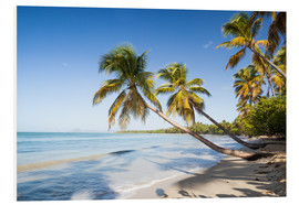 Forex  Famous Les Salines tropical beach with palm trees, Martinique, Caribbean - Matteo Colombo