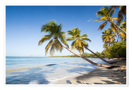 Premium poster  Les Salines tropical beach, Martinique, Caribbean - Matteo Colombo