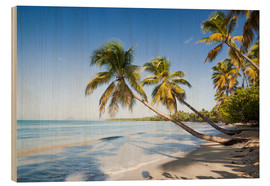 Wood print  Les Salines tropical beach, Martinique, Caribbean - Matteo Colombo