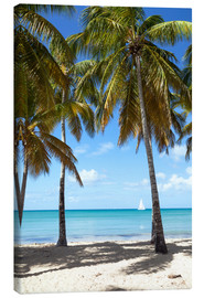 Canvas print  Palm beach with sailboat, Martinique - Matteo Colombo