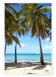 Premium poster  Palm beach with sailboat, Martinique - Matteo Colombo