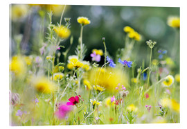 Acrylic print  Summer Meadow with blooming wild Flowers - Lichtspielart