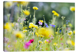 Canvas print  Summer Meadow with blooming wild Flowers - Lichtspielart