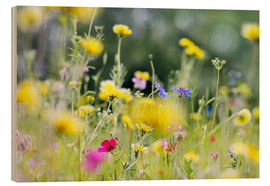 Wood print  Summer Meadow with blooming wild Flowers - Lichtspielart